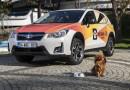 Subaru ve National Geographic işbirliğiyle Pati Birliği