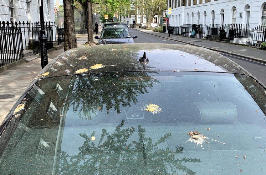 Ford'dan kuş pisliklerine karşı sıra dışı boya koruma yöntemi