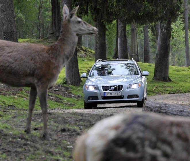 Volvo'dan vahşi hayvanlara önlem